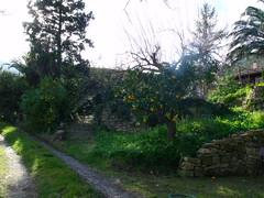 DSCF9097 (pixelated face) Tags: licht schaduw 2010 kerstvakantie sinaasappelbomen