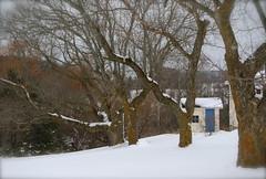 blue door (Bean in Sylvan Lake) Tags: winter michigan pottingshed lakeleelanau leelanaucounty