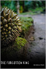 The Forgotten King (tamahaji) Tags: fruits king malaysia durian tanjung malim