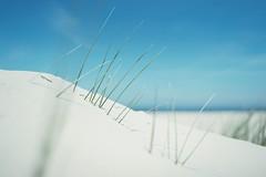 marram grass (christian mu) Tags: norderney meineinsel northsea marramgrass dünengras sand dunes dünen meer sea ocean beach strand sonya7ii sony planar5014 planar 50mm 5014 christianmu germany ostfriesischeinseln ostfriesland bokeh nature landscape