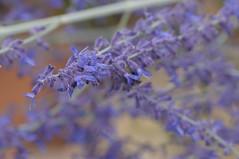 20170702_Jardins_Secrets_Vaulx_Fl (16 sur 20) (calace74) Tags: rhonealpes fleur france insectes jardin jardinssecrets macro vaulx