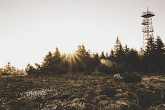Sun (hoppstaedterfabian) Tags: schwarzwald blackforest germany deutschland forest wald tree baum trees bäume landschaft landscape landschaftsaufnahme landscapephotography landschaftsfotografie lensflare linsenreflektion lightroom nature natur sonne sonnenstrahlen sonnenaufgang sun sunrays sunrise weroamgermany