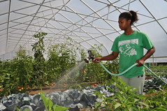 Mallory Horton Waters Plants in the GreenHouse at Harvesting Earth Urban Garden