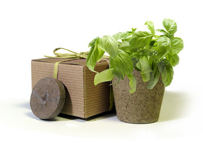 eco-herb-favor-basil-jr