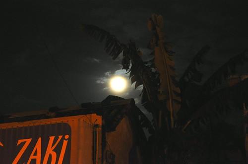 Nocturna (7)