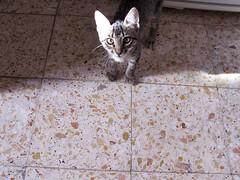 sardinha (Rosa Pomar) Tags: gato gata coziha