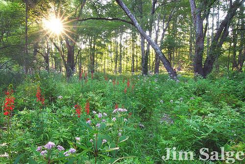 Garden in the Woods IV