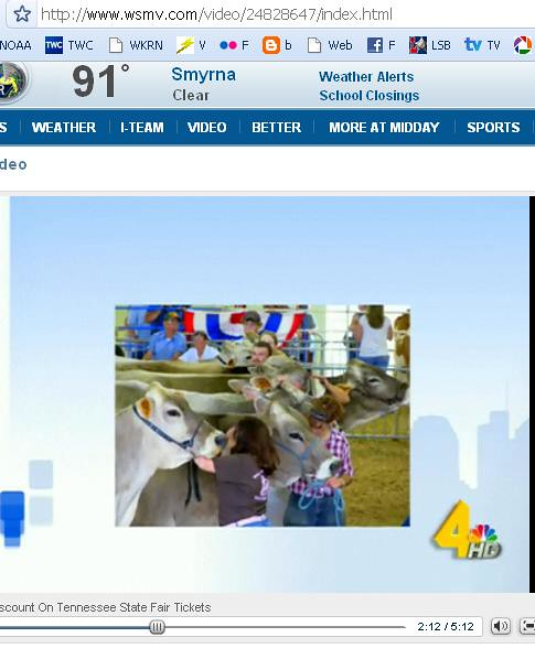 Published Photo: Show Cows on WSMV