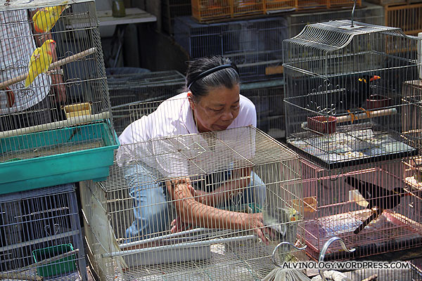 Vendor grabbing a bird out for her customer to inspect