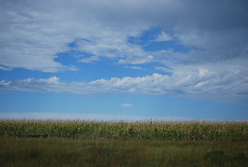 moving car photography - corn & sky MN