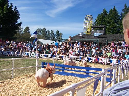 aug 273 Alaskan Racing Pigs take on the hurdles!