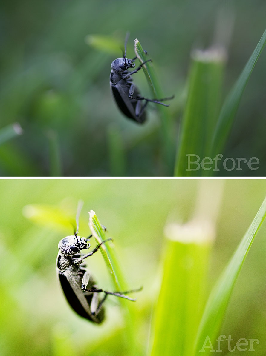 The Bug Before and After