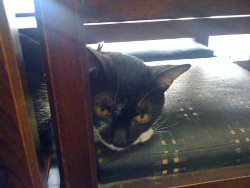 美味しい刺身定食を出してくれた魚屋さんに住む、幸せな猫どん。