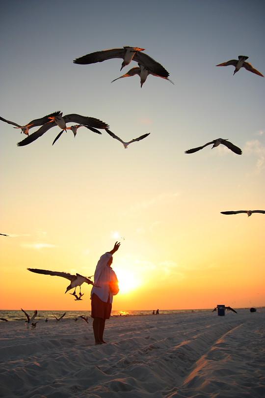 DBandbirds2
