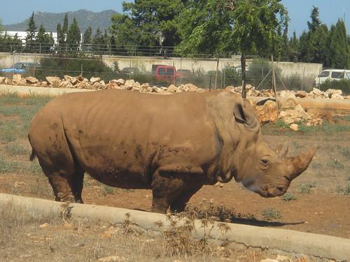 203 - Safari Zoo