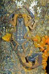 Night Macro-080910 ( Bryan aka Numnumball ~**) Tags: macro night nikon singapore insects sbr200 su800 tc14x afd200microf4 sbr1c