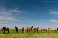 Horse and Caballos. ( Mauricio.) Tags: sky horse field caballos pasto cielo campo could nube nikond90 mauriciobolletta