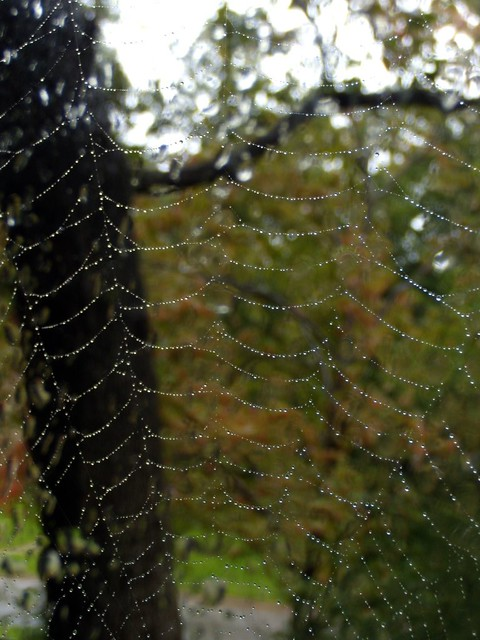 oak web