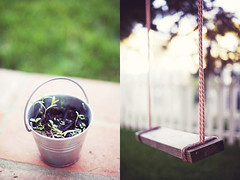 seed + swing (jasfitz) Tags: garden bucket diptych sandiego herbs 50mm14 patio seedlings narrative pail picketfence encinitasca flowerstobe 5dmarkii woodandropeswing ilovevisitstosusans