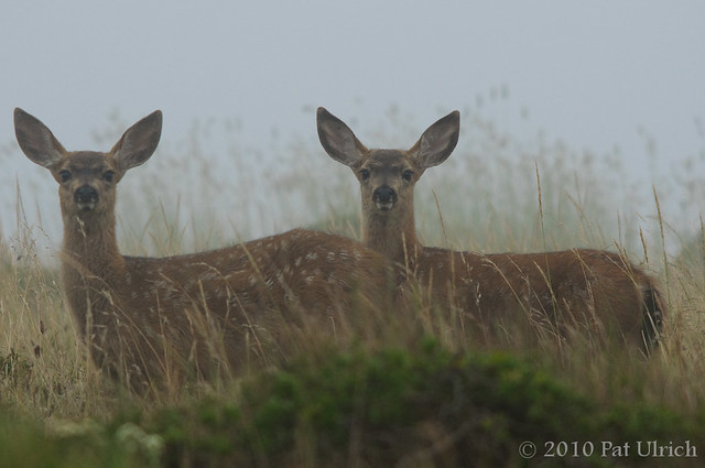 Heavy fog, with fawns