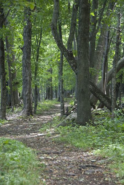 FH trail