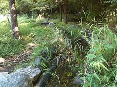 菅刈公園にはメダカやタニシがいます