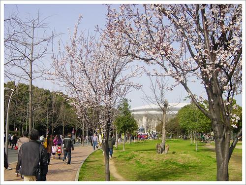 長居公園の桜@セレッソ大阪 VS ガンバ大阪_201003