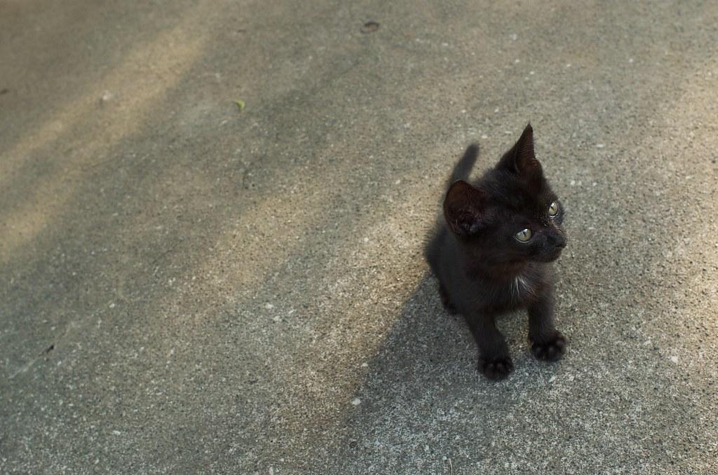 Kitty #3
