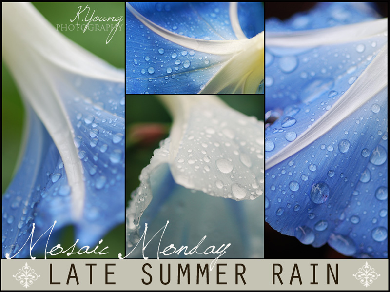 Mosaic Monday: Late Summer Rain