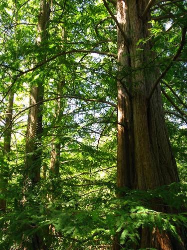 a tree like rack