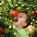 Caleb was too anxious to take a bite to wait for the picking at Behling's Apple Orchards in Mexico NY. Photo: Donna Strejlau.