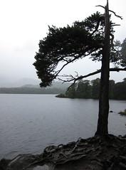 Derwentwater (Desmo Dave) Tags: england lakes lakedistrict derwentwater keswick