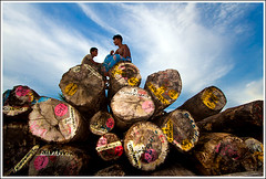 Solidarity [..Narayanganj, Bangladesh..] (Catch the dream) Tags: wood trees friends boys smile support friendship pyramid timber duo logs solidarity pile round huge bangladesh lumber strenght piled bulwark solidity narayanganj piledlogs bulwork camardarie gettyimagesbangladeshq2