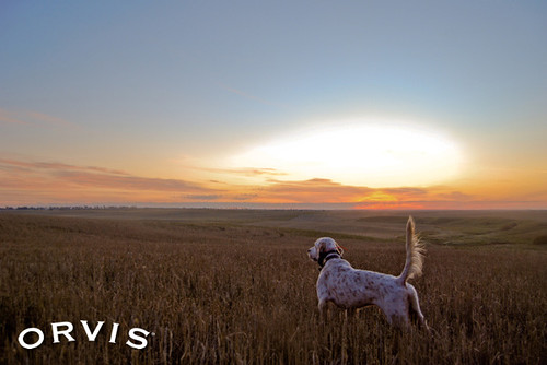 Orvis Cover Dog Contest - Rocko