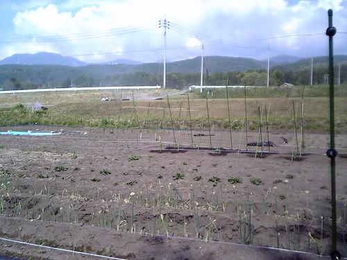 畑植え付け後② 07.5.24 by Poran111