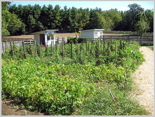 farm 10