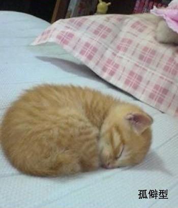 貓的睡姿06