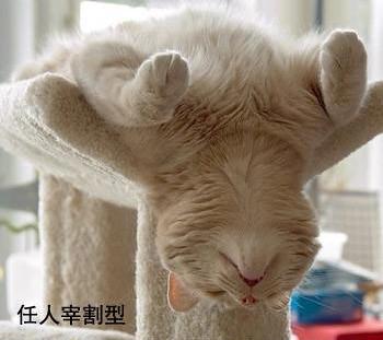 貓的睡姿07
