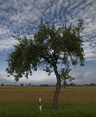 Der Baum (Herrlehof, Ellgau, Bayern) (losgor ) Tags: summer tree germany bayern deutschland bavaria sommer olympus el agosto verano árbol alemania e3 der zuiko baum augsburg schwaben baviera 1260 landkreis suabia ellgau herrlehof
