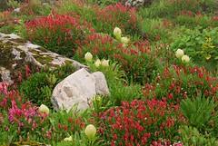 Gardens of Himalaya