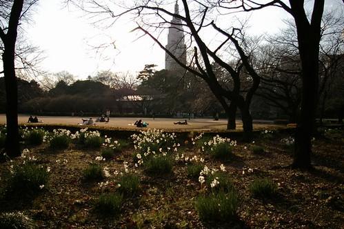新宿御苑.2007.01.08_1