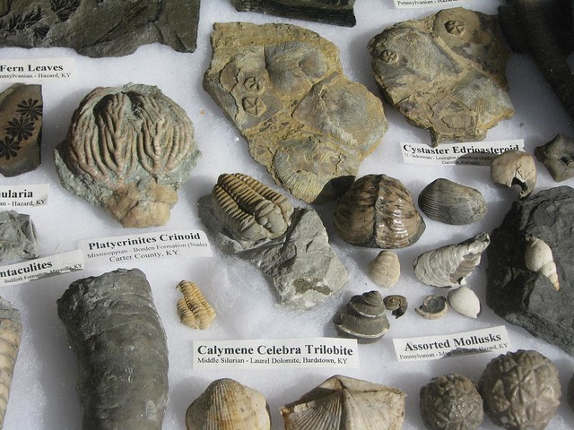 Kentucky Paleontological Society fossil collection