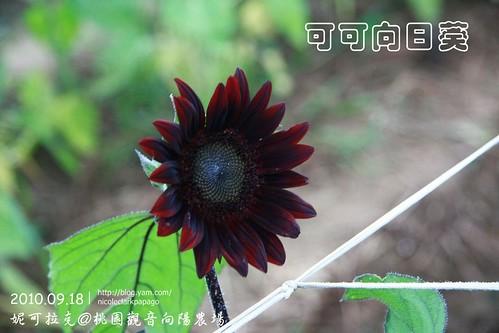 桃園觀音向陽農場20100918-087