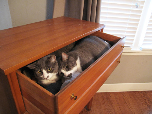 BootsDinahsaurDrawer