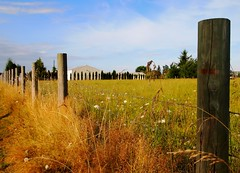 Take me home, country roads (Darwin Bell) Tags: blue sky field rural fence washington vashonisland frass artofimages bestcapturesaoi