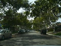 Sharynne Lane in Torrance (bigmikelakers) Tags: california street trees neighborhood suburbs southbay torrance upscale affluent
