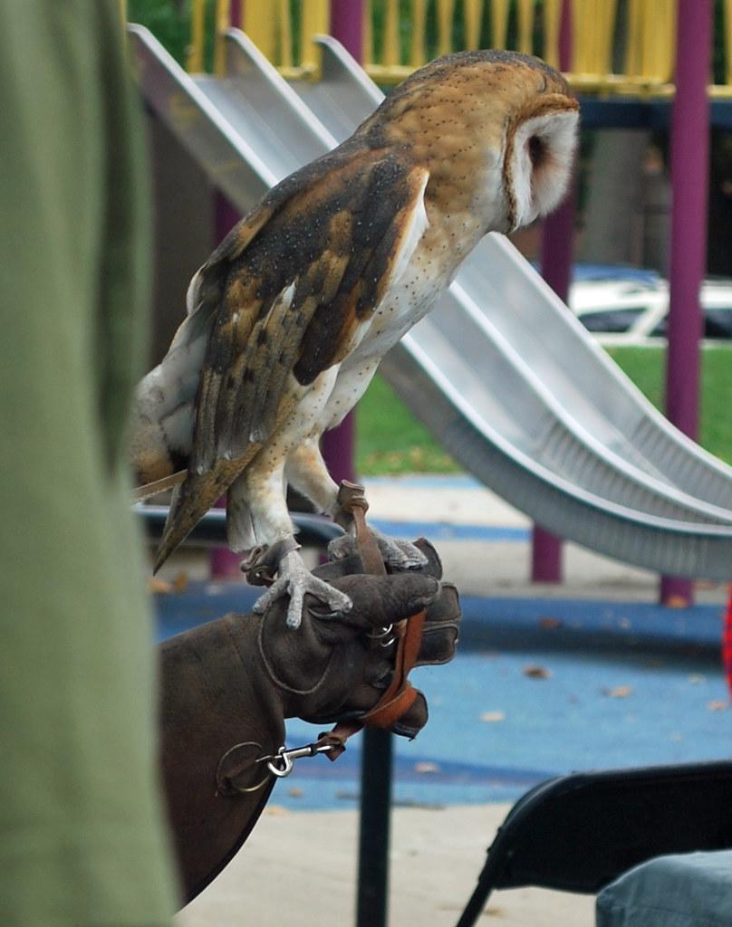 TACF Owl