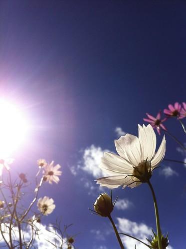 Sun & Cosmos