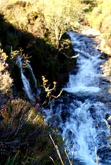 NorthGlenSannoxWater5 (Assja) Tags: autumn mountains fall water leaves forest landscape golden scotland highlands rocks stream heather herbst glen hills naturereserve valley bracken rowan isleofarran birches indiansummer birchtree schottland wirbel herbststimmung ruska naturreservat hochland wildbach zauberwald birkenwald farnkraut heidekraut ebereschen torfmoor remarkabletrees feenwald wildpfad thebrackenisgoldinthesun northendofarran subarktischestimmung