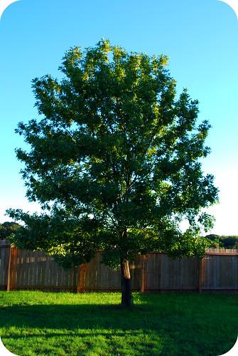 treelightangle